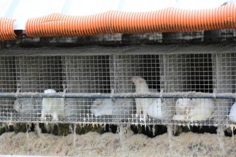 Photo prise en 2014 dans l'élevage francais d'Emagny