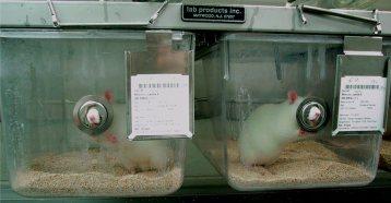 rat+lab_mini